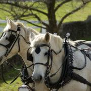 driving-horses-ajs