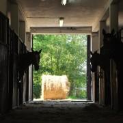 oboz konny kj huzar fotografia (1)