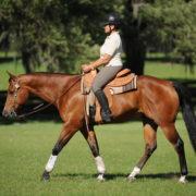 western kon i jezdziec