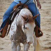 western_horse_1