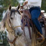 westernowy kon